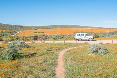 to dominate: SKILPAD, SOUTH AFRICA - AUGUST 14, 2015: Large fields of orange daisies dominate the landscape of the Namaqua National Park at Skilpad tortoise during late Winter and Spring