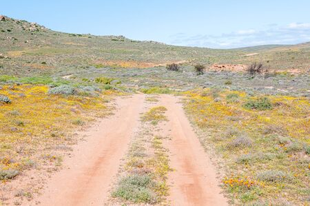 northern cape: Road through a field of wild flowers near Spoegrivier spit river in the Northern Cape Namaqualand region of South Africa Stock Photo