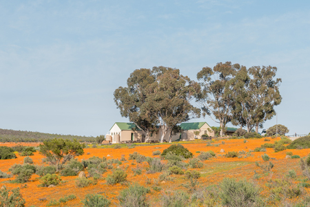 northern african: SKILPAD, SOUTH AFRICA - AUGUST 18, 2015: The offices of the Skilpad section of the Namaqua National Park viewed across a sea of orange daisies