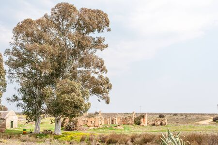 northern cape: An old tree and ruins at Matjiesfontein farm near Nieuwoudtville in the Northern Cape Province of South Africa Stock Photo