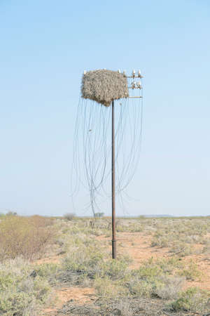 northern african: Obsolete telecommunications infrastructure and a community birds nest in the harsh Karoo landscape near Vanwyksvlei in the Northern Cape Province of South Africa