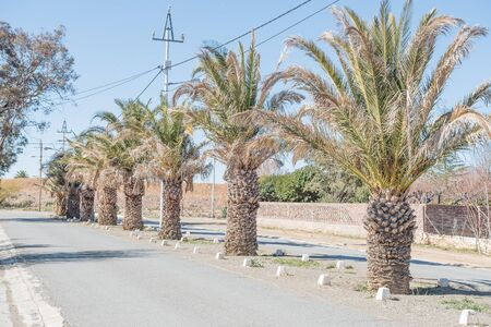 palm lined: A date palm lined street in Carnavon, a small town in the Northern Cape Karoo region Stock Photo
