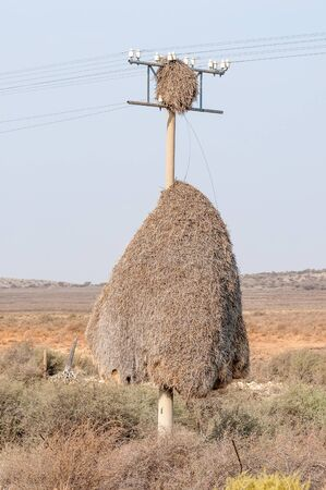 telephone pole: Community bird nests on a telephone pole next to the road between Copperton and Prieska in the Northern Cape Province of South Africa