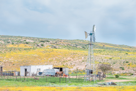 house donkey: SOEBATSFONTEIN, SOUTH AFRICA - AUGUST 14, 2015: A house and windmill between flowers at Boemansuitkyk Busman View. Nature trails and guided tours by donkey cart are available from here