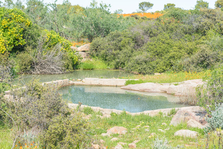 grey water: A waterhole called Skilpadgrouwater tortoise grey water at the Skilpad section of the Namaqua National Park of South Africa