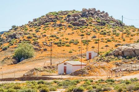 northern african: A sea of orange daisies in Nababeep, a small mining town in the Northern Cape Namaqualand Stock Photo