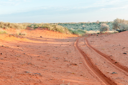 northern cape: Vehicle tracks in the red Kalahari sand of the Northern Cape Province of South Africa Stock Photo
