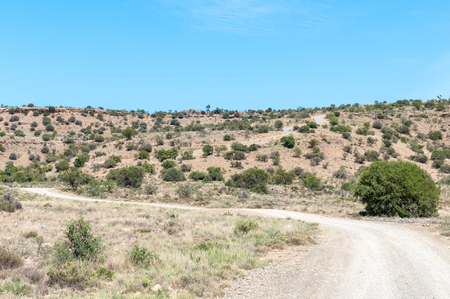 nature conservancy: A mountain pass in the Mountain Zebra National Park near Cradock in South Africa