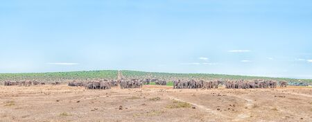 nature conservancy: More than 200 elephants waiting in family groups to drink at Hapoor Dam