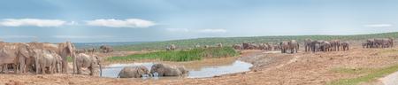 pozo de agua: Un gran grupo de elefantes en una charca fangosa