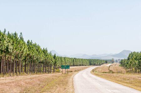 ヨハネスブルグと松の植林の横にある、プレテンベルグ ベイ R102 地域の道路 写真素材