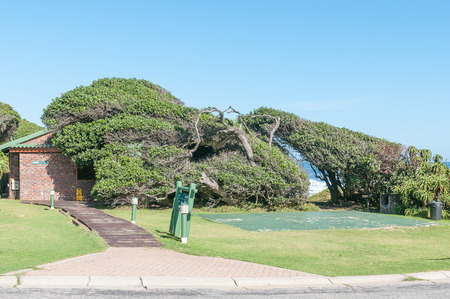 camping site: STORMS RIVER MOUTH, SOUTH AFRICA - FEBRUARY 28, 2016:  A camping site and ablution facilities at the rest camp. The shape of the trees is due to the fierce winds constantly blowing from the sea