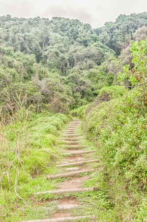 return trip: The Waterfall Trail on a rainy day, a difficult 6.4 km return trip through dense forest and along the coastline