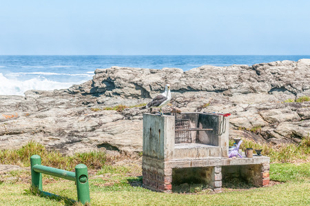 camping site: A typical scene at the rest camp at Storms River Mouth - a kelp gull waiting to scavenge for food at a camping site