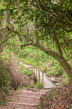 return trip: A bridge on the Waterfall Trail on a rainy day, a difficult 6.4 km return trip through forest and along the coastline Stock Photo