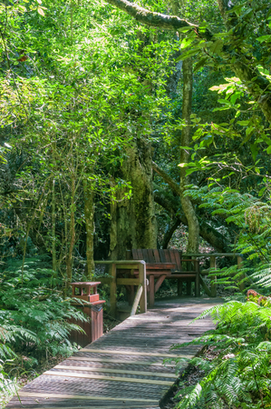 eden: A rustic corner at the Garden Of Eden, a network of boardwalk trails through the Tsitsikama Forest Stock Photo