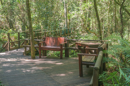 garden of eden: A rustic corner at Garden Of Eden, a network of boardwalk trails through the Tsitsikama Forest