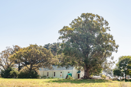 lutheran: The Evangelical Lutheran Church under a huge eucalyptus tree on a farm between Karatara and Rondevlei in the Garden Route Stock Photo