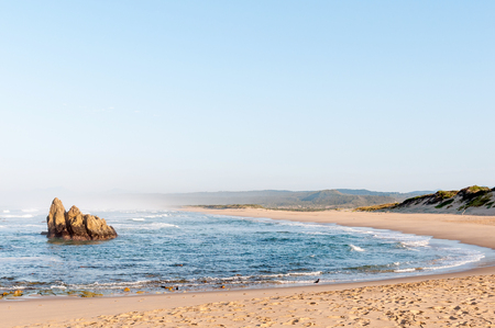 indian buffalo: Early morning scene at a beach at Buffelskop near Knysna. Two endangered Black Oystercatchers. Haematopus moquini, are visible on the beach Stock Photo