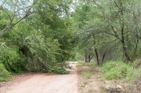 wilderness area: A fallen tree on the road through the Wilderness area in the Baviaanskloof (baboon valley)