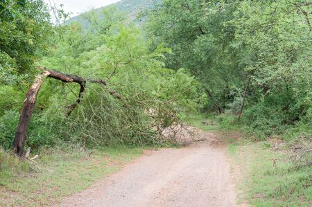 wilderness area: A broken tree blocks the road through the Wilderness area in the Baviaanskloof (baboon valley) Stock Photo