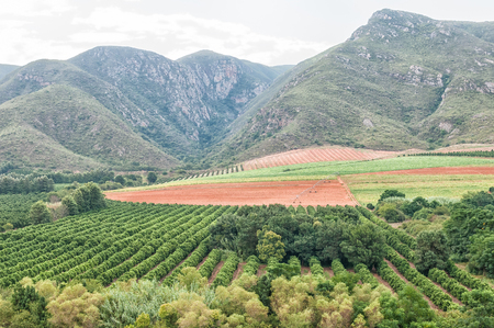 mealie: Citrus and farming next to the Groot River in the Baviaanskloof near Patensie