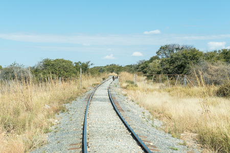 Babuinos de Chacma en las vías del tren entre Kombat y Grootfontein en la región Otjozondjupa de Namibia