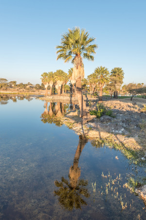 Sunset view with reflections of palm trees of the dam at Gross Barmen, near Okahandja in the Otjozondjupa Region of Namibia Stock Photo