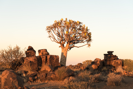 Sunrise at the quiver tree forest at Garas Park Rest Camp, near Keetmanshoop on the B1-road  to Mariental