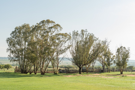An early morning farm scene at the Koranna Mountain near Excelsior in the Free State Province of South Africa
