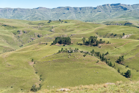 A farm landscape with cows as seen from the Pot River Pass in the Eastern Cape Province of South Africa