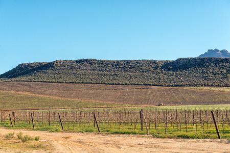 Farm scene at Dwarsrivier in the Cederberg Mountains. Vineyards are visible