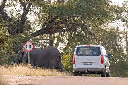 KRUGER NATIONAL PARK, SOUTH AFRICA - MAY 5, 2019: A vehicle passing by an african elephant. A road speed sign is visible Redakční