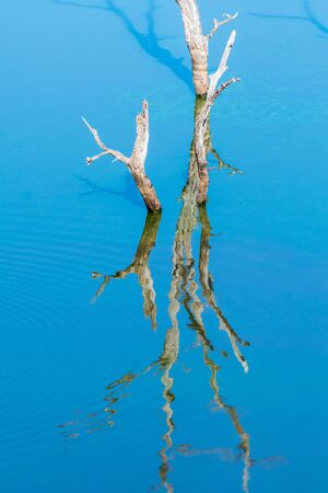 Dead trees, with their reflections visible, in the Pioneer Dam