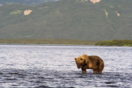 O urso tem fechado os olhos a pata