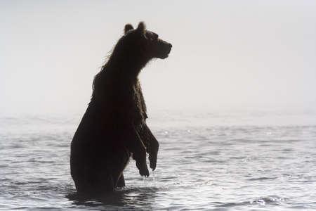 kamchatka: Kamchatka Stock Photo