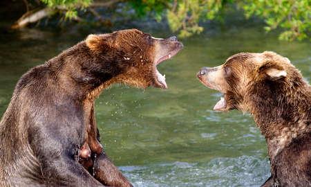 A conversa urso