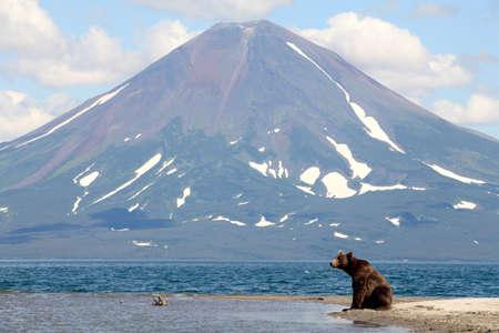 far east: Oso y un volcán Foto de archivo