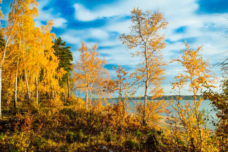 Floresta colorida e brilhante de outono