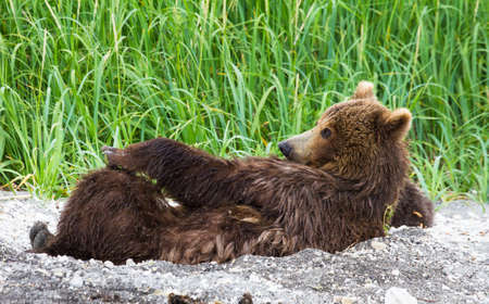 Feminino urso marrom Imagens