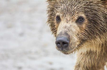 bear cub photo