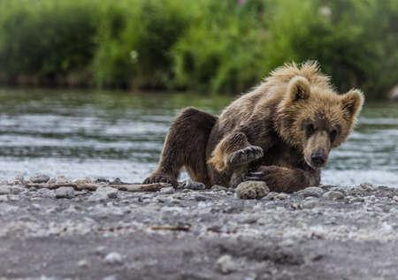 filhote de urso Imagens