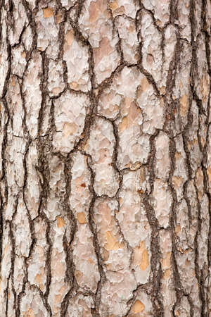 chobot: Pine Tree Trunk kůra