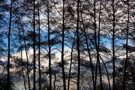 Silhouette d'un des arbres contre le ciel nuageux Banque d'images
