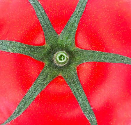 Six feuilles sur le dessus d'une tomate Banque d'images