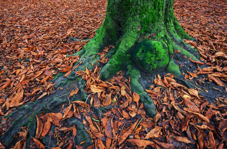 Moss covered tree trunk surrounded by fallen leaves Stock Photo