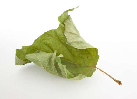 S�ch� feuille verte sur fond blanc avec une ombre douce