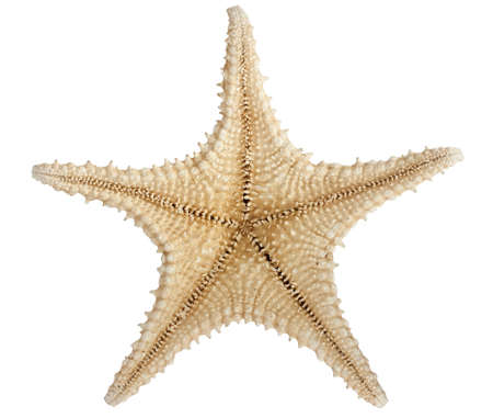 Underside of star fish isolated on white with a clipping path