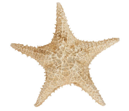 star of life: Star fish isolated on white with a clipping path Stock Photo