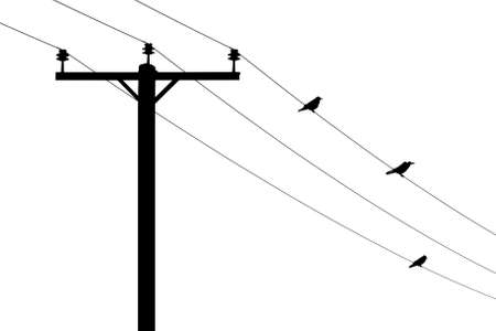 Telegraph pole with three birds on the wires in silhouette